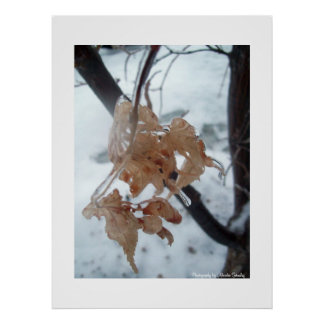 Leaves of Glass Poster
