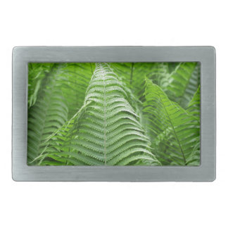 Leaves of Polystichum ferns Rectangular Belt Buckle