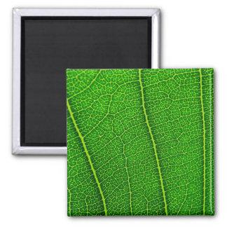 leaves square magnet