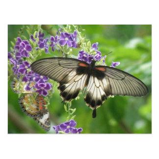 Legend of Butterflies Postcard