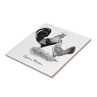 Leghorns Production Brown Chickens Tile