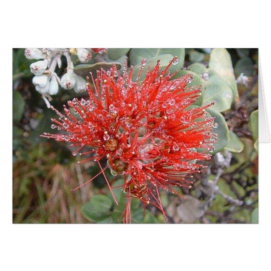 Lehua Blossom Card