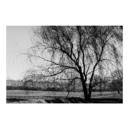 Leiper's Tree Poster