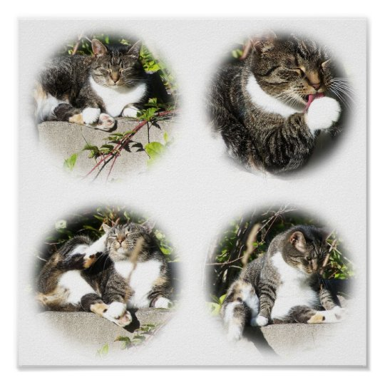 Leisure Time Of A Cat Collage Print
