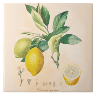 Lemon Fruit Ceramic Accent Tile, Kitchen Decor Tile