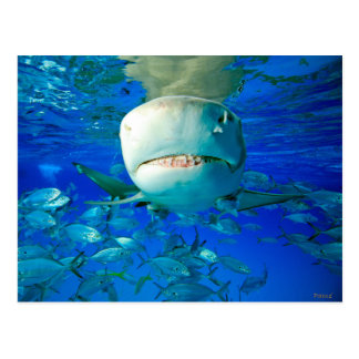 "Lemon Shark ""Say Cheese"" Postcard"