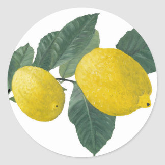 Lemons on a branch classic round sticker
