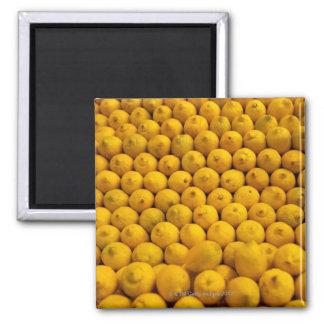 Lemons Square Magnet