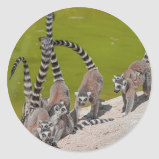 lemur at the zoo classic round sticker