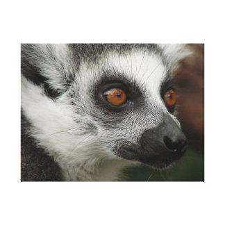 Lemur Canvas Print
