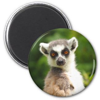Lemur Magnet