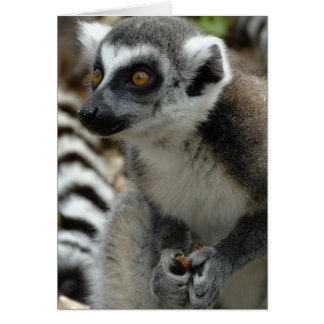 Lemur Monkey Greeting Card