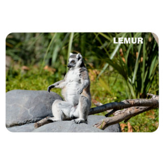 Lemur Monkey Magnet