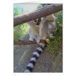 Lemur Peeking Note Cards