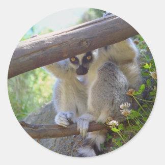 Lemur Peeking Stickers