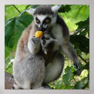 Lemur Photo Print