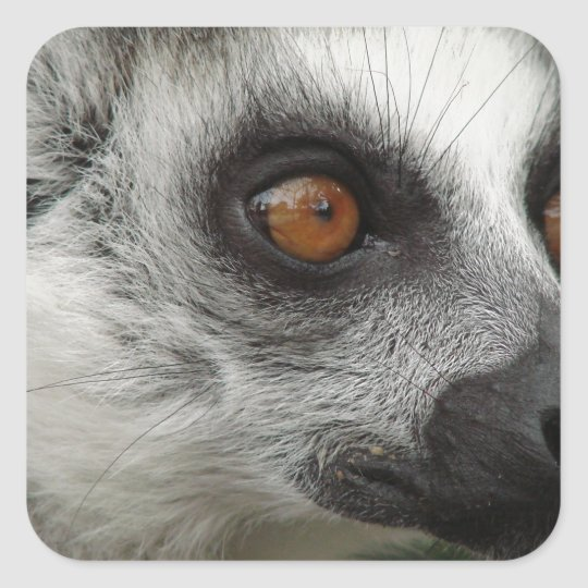 Lemur Photo Square Sticker
