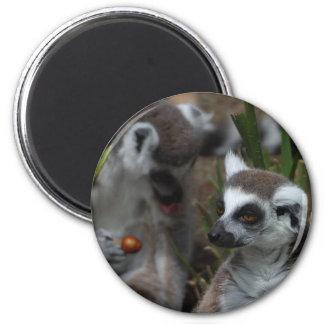 Lemurs Animals 2 Inch Round Magnet
