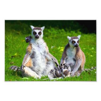 Lemurs Family Photo