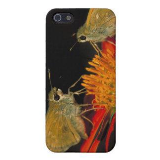 Leonard's skipper butterfly on Mexican sunflower Cover For iPhone 5/5S