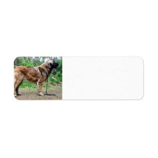 Leonberger-full Return Address Label