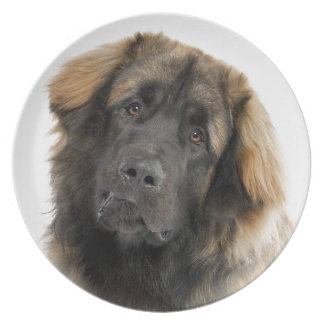 Leonberger Plate