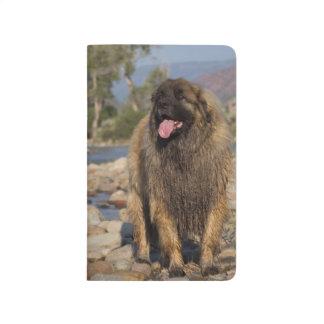 Leonberger Pocket Journal/Sketchbook Journal
