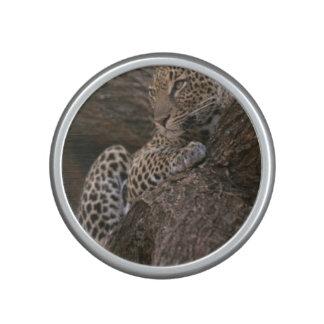 leopard-19 speaker
