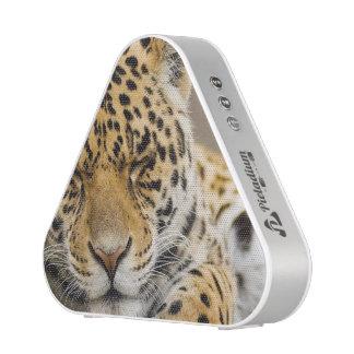 leopard-21 speaker