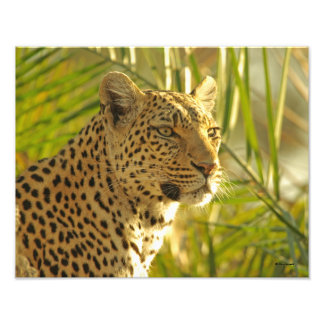 Leopard Among Palm Leaves Photo Art