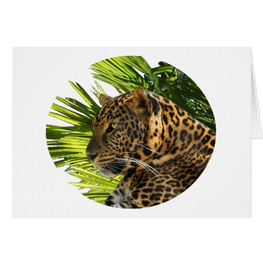 LEOPARD AND PALMS CARDS