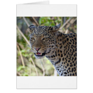 Leopard Cat Animal Africa Jungle Country Destiny Card