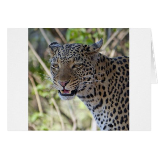 Leopard Cat Animal Africa Jungle Country Destiny Cards