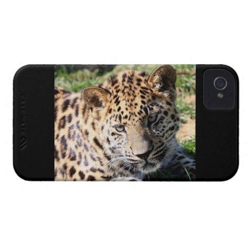Leopard cub baby cute photo blackberry bold case