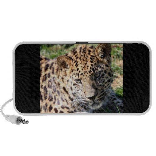 Leopard cub baby cute photo doodle speakers