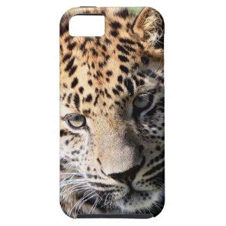 Leopard cub cute photo iphone 5 case mate tough