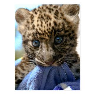 Leopard cub postcard