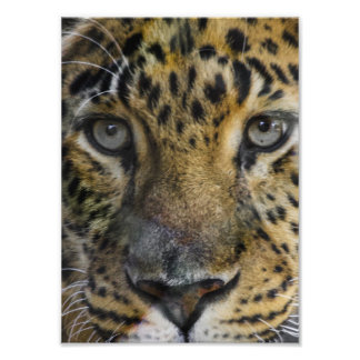 Leopard Face of Hunger Photo Print