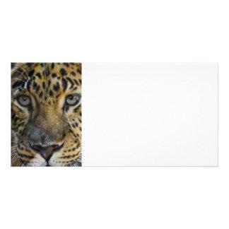 Leopard Face of Hunger Custom Photo Card