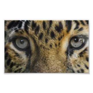 Leopard Face of Hunger Photograph
