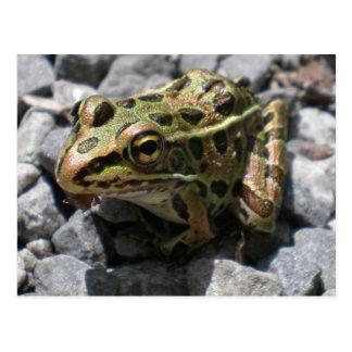 Leopard Frog Post Card