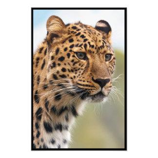 Leopard Head Shot Photo Art