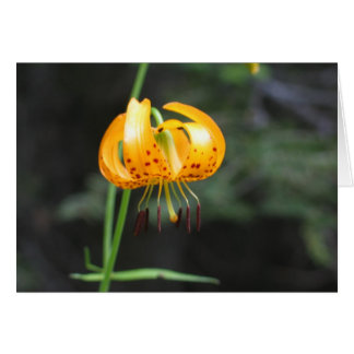 Leopard lily, Sequoia National Park Card