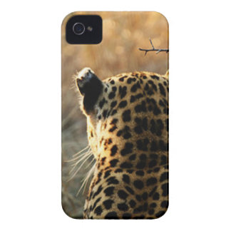 Leopard Looking Off Into Distance Case-Mate iPhone 4 Cases