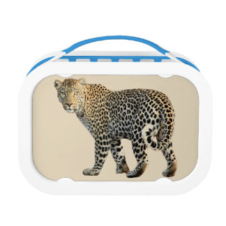 leopard lunch box