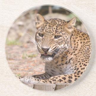 Leopard lying coaster