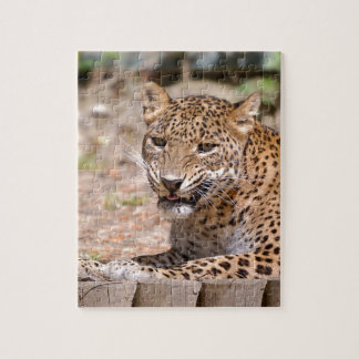Leopard lying jigsaw puzzle