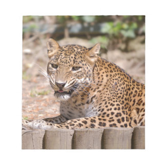 Leopard lying notepad