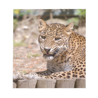 Leopard lying notepads