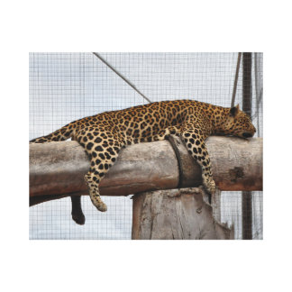 Leopard lying on a branch canvas print